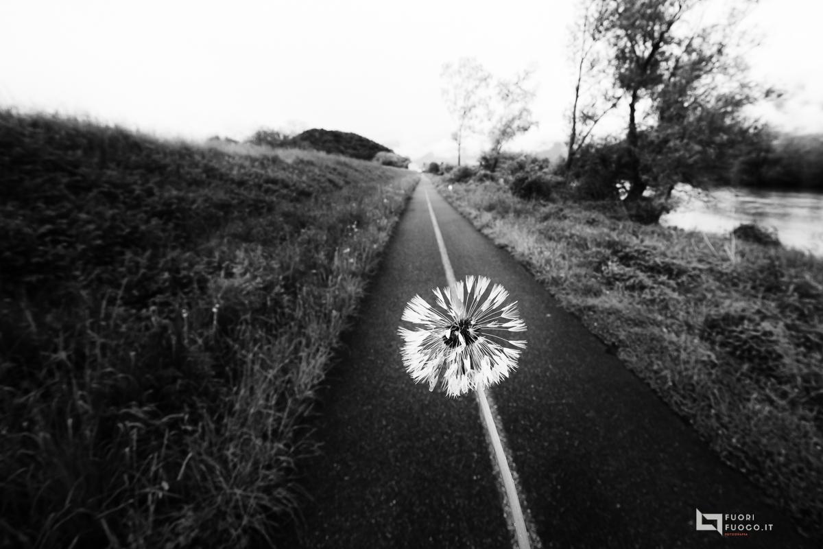 La strada della vita-8